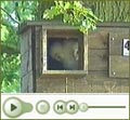 nestbox movie