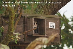 Barn Owl Nest Box (Made from solid timber)