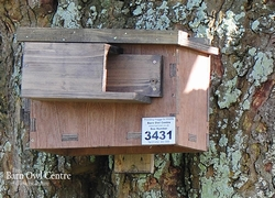 Little Owl Nest Box (Made from 18mm Plywood)