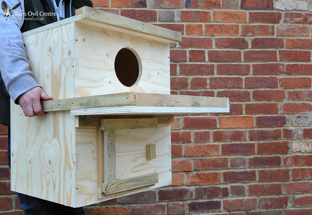 Owl Nesting Box uk Indoor Barn Owl Nest Box Made
