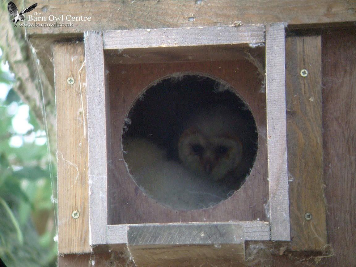 The Barn Owl Centre - Barn Owl Nest Boxes - The Barn Owl ...